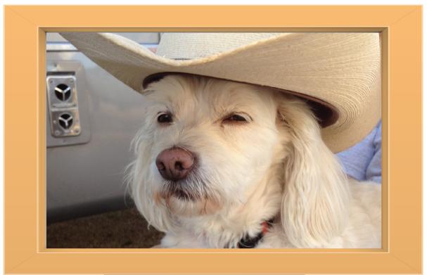 cowboy-dog